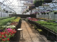 HCHS Greenhouse is OPEN